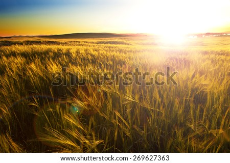 Fields and sunset.Agricultural landscape - stock photo