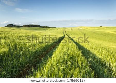 Fields in north Poland/Fields - stock photo