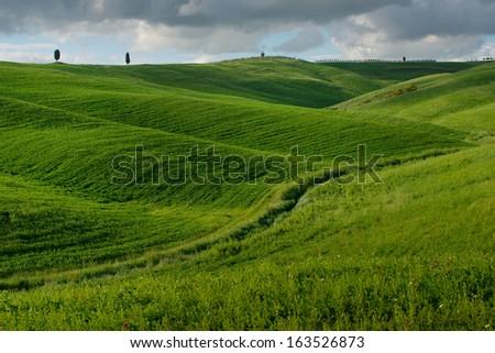 Fields in the Tuscany, Italy - stock photo