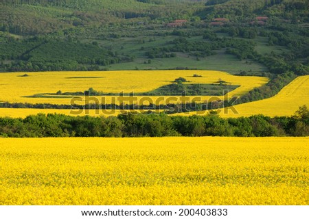 Fields of rape flowers in Bulgaria in the spring - stock photo