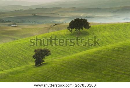 Fields of Tuscany - stock photo