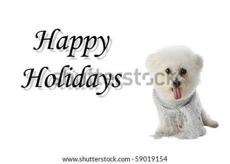 Fifi the Bichon Frise in various poses all isolated on white with Holiday Greetings. Greetings can be removed and replaced with your text - stock photo