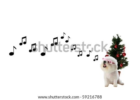 Fifi the Pure Bred Bichon Frise sings a song of love and Christmas and Holiday Cheer in front of her Christmas Tree isolated on white - stock photo
