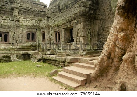 Fig trees growing in Angkor temples - stock photo
