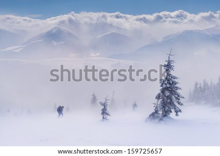 Fight for survival in winter mountains - stock photo