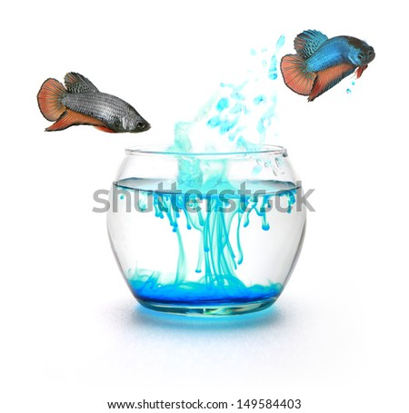 Fighting fish jumping to change color - stock photo
