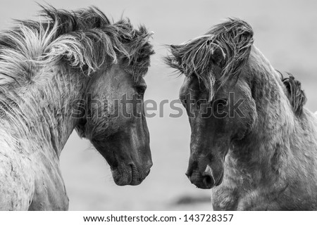 Fighting horse - stock photo