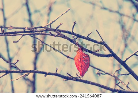 Filtered image : A red leaf hangs on bare branch. Effects were used in the photo to look old and vintage like filter in Instagram. - stock photo