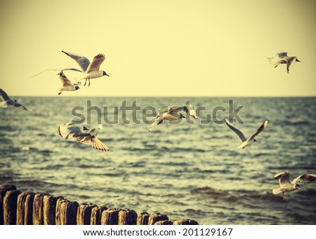 Filtered Vintage Retro Styled birds on the sea. - stock photo