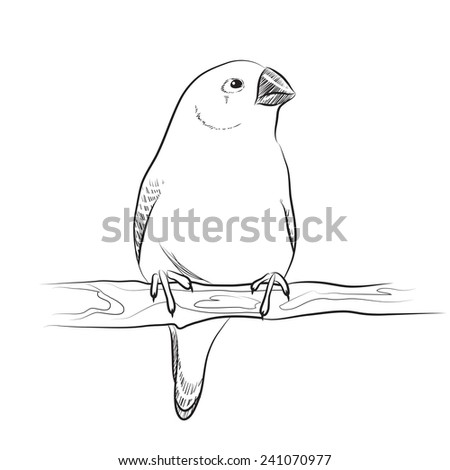 Finches. Two birds. Line illustration. Raster version - stock photo