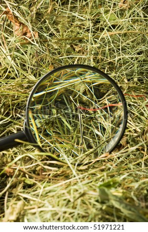 Finding the needle with magnifying glass in the haystack - stock photo