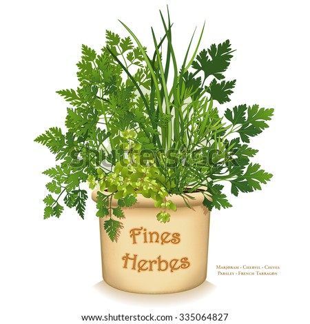 """Fines Herbes Garden Planter,""""fine herbs"""" for traditional French cooking, Chervil, French Tarragon, Sweet Marjoram, Chives, Italian Parsley, clay flowerpot crock isolated on white. - stock photo"""