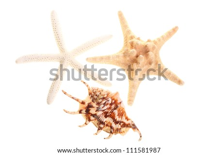 Finger Starfish isolated on white Sea stars and shells nature - stock photo