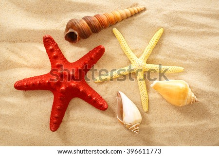 Fingerfish, seastar and seashells in sand closeup - stock photo