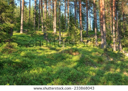 Finnish forest at summer - stock photo