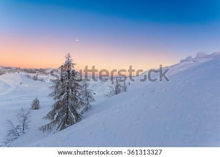 Fir alone in winter landscape in Julia alps-Slovenia - stock photo