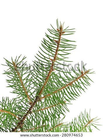 fir branch isolated on a white background - stock photo