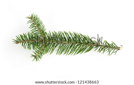 Fir branch on white background - stock photo