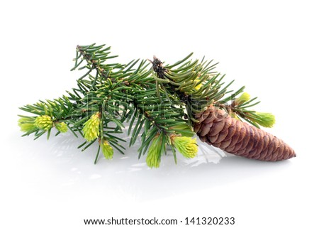 Fir branch with cone on white background - stock photo