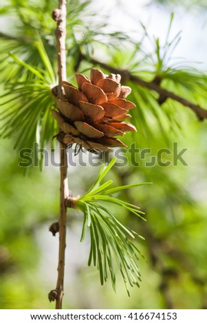 Fir branch with fir-cone. Forest landscape, sunny dat. green energy, eco concept. soft focus, shallow depth of field  - stock photo