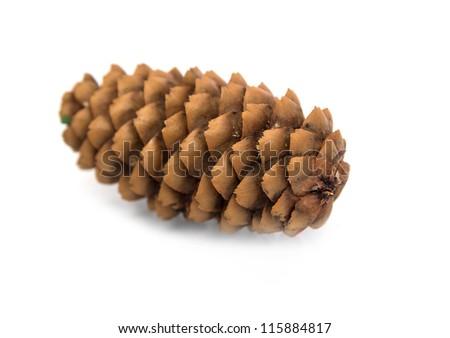 fir-cone - stock photo