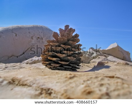 Fir-cone on the stone - stock photo