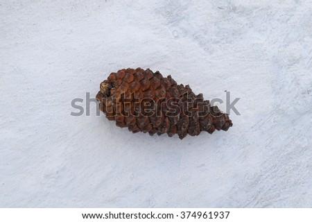 Fir cones on a white concrete. Fruit gymnosperms. - stock photo