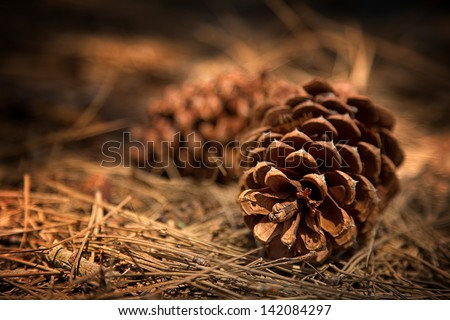 Fir cones on the forest floor with intentional shallow depth of field and vignetting. - stock photo