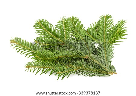 Fir tree branch isolated on white - stock photo