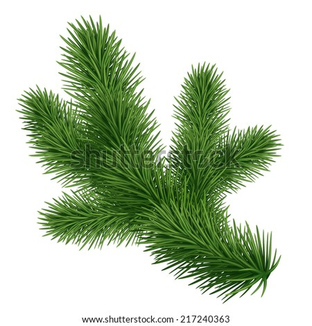 fir tree branch isolated on white background, coniferous plant illustration - stock photo