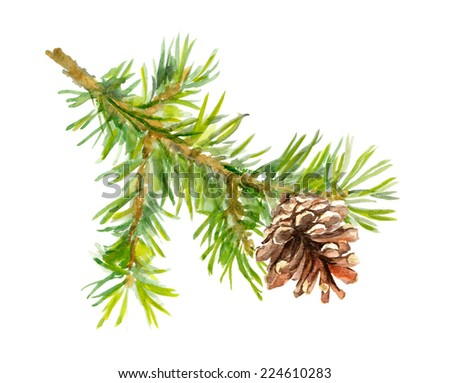 Fir tree branch with cone. Watercolor - stock photo