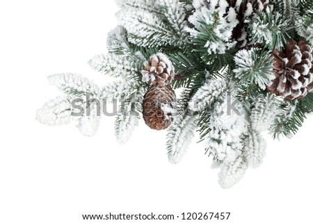 Fir tree branch with cones covered with snow. Isolated on white background - stock photo