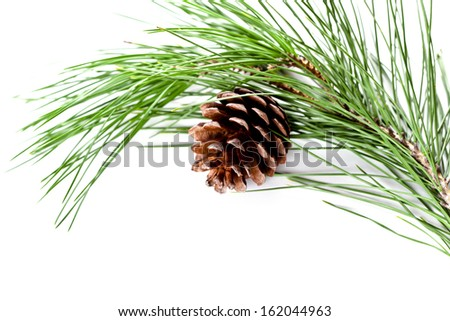 fir tree branch with pinecone isolated on white background - stock photo
