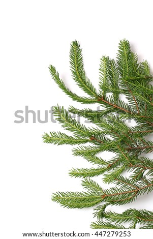 fir tree branches isolated on white background christmas background - stock photo
