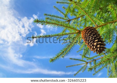 Fir-tree branches with the cone against the sky with clouds - stock photo