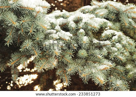 fir tree brunches and snow - stock photo
