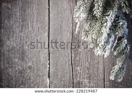 Fir tree covered with snow on wooden board - stock photo