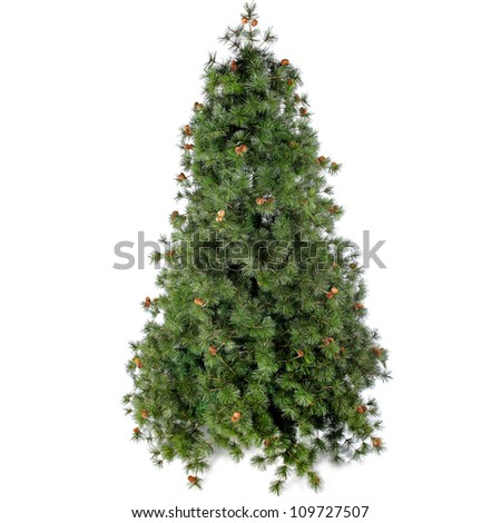 fir tree for christmas on white background stock photo