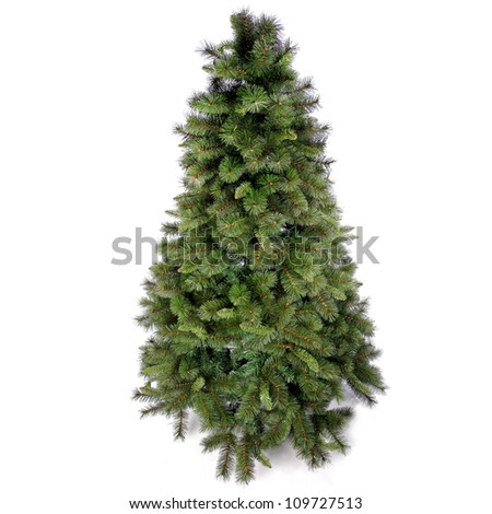 Fir tree for Christmas on white background - stock photo