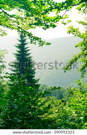 Fir-tree in the mountains - stock photo