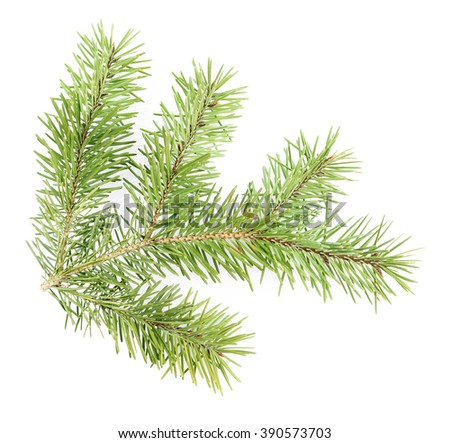 Fir tree twig isolated on white - stock photo