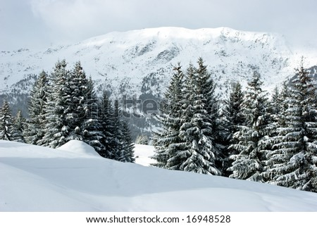 Fir trees covered with snow on a winter mountain - stock photo