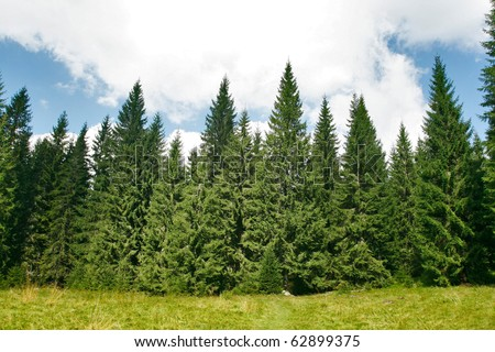 Fir trees on green plain - stock photo