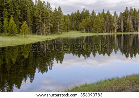 fir trees on Yellowstone Lake in Yellowstone National Park - stock photo
