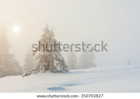Fir trees under the snow. Winter landscape. Mist and sun - stock photo
