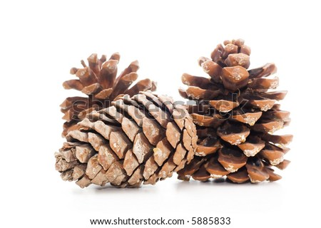 Fircones on a white background - stock photo