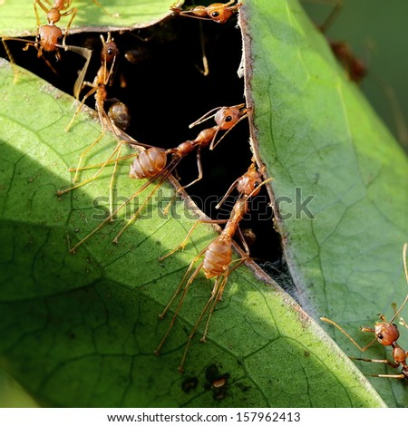 Fire Ants Building Their Nest - stock photo