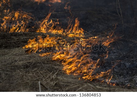 fire grass - stock photo