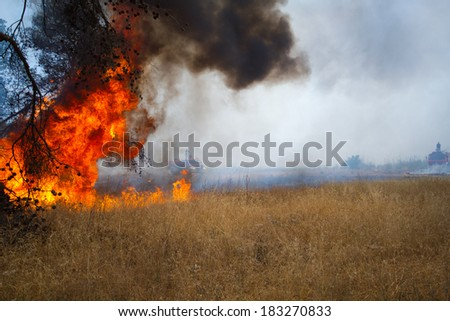 Fire in the woods - stock photo
