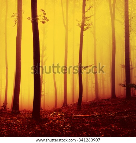 Fire red saturated autumn season foggy forest background. Oversaturated yellow red forest trees background. - stock photo